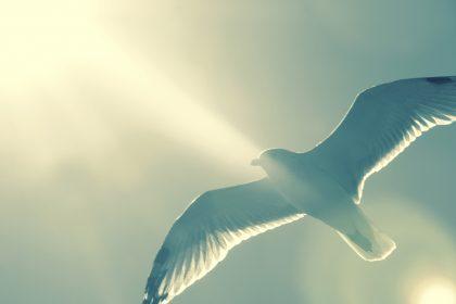 En Dieu, tu trouves la paix
